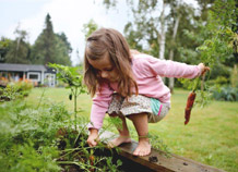 Girl in garden pulling carrot - full